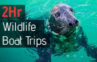 Newquay Coastal Wildlife Boat Trips
